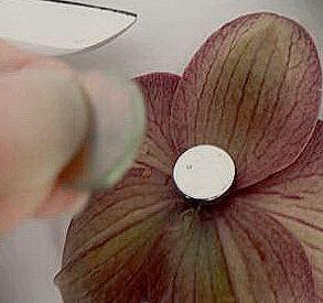 магнит неодимовый  1 см к бутоньерке